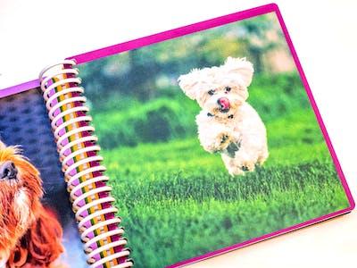Babyboek als dierenboekje: Laat je creativiteit de vrije loop