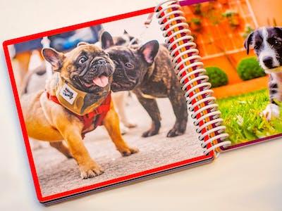 Je eigen boekje met kleurtjes en dierenfoto's