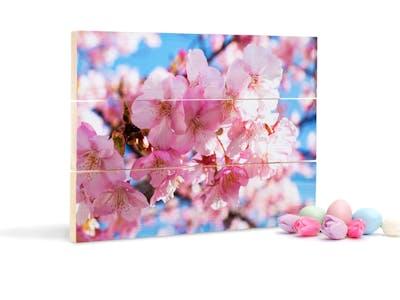 Foto auf Holz mit Frühlingsmotiv.