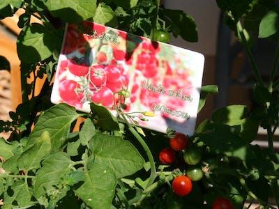 Pixum Fotomagnet, gestaltet als Gartenmagnet für Tomaten.