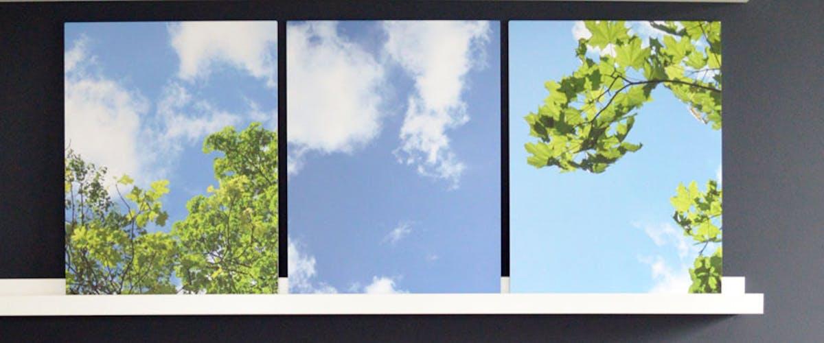 Himmel und Baumkronen auf Forex