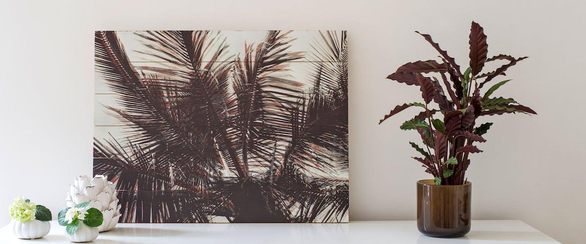 Foto auf Holz - Palme auf Kiefernholz-Latten