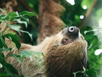 Ob Aufnahmen vom Haustier oder aus dem Zoo - mit einem Fotoalbum setzt du deine schönsten Tierbilder ideal in Szene.