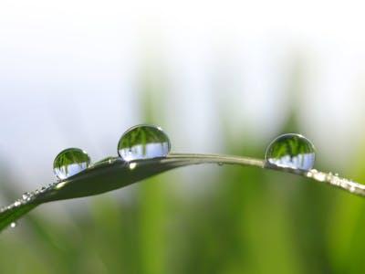 Makroaufnahme von Wassertropfen auf einem Grashalm.
