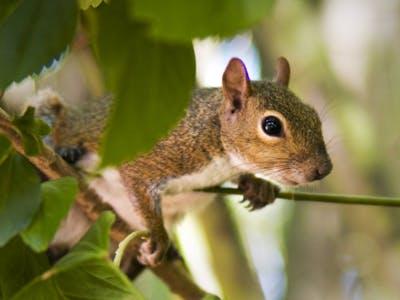 Tolle Fotos von Waldtieren eignen sich perfekt fürs Tieralbum.