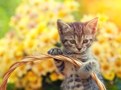 Kreiere deinen Katzenkalender