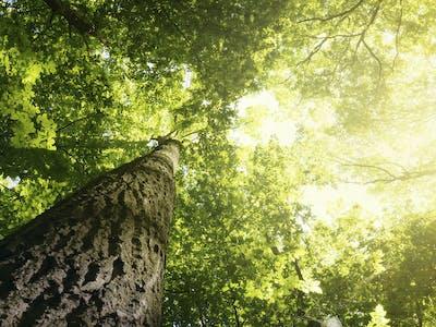 Aus der Froschperspektive wirken Bäume, Gebäude und auch Personen nahezu majestätisch.
