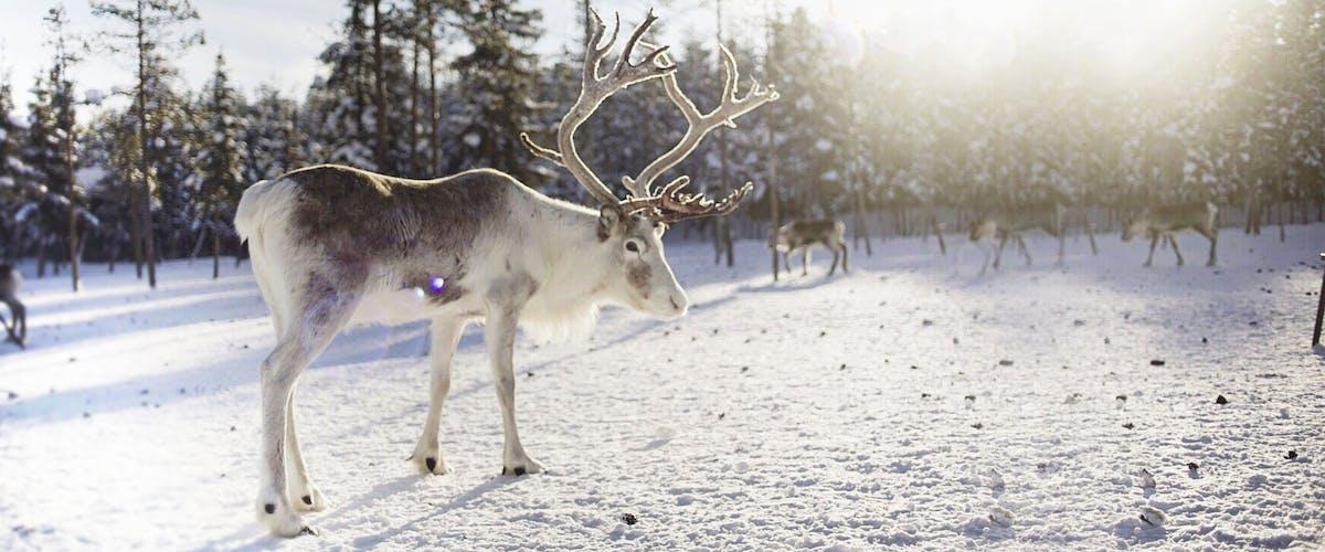 Pixum Online-Adventskalender - bis zum nächsten Mal!